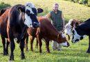SPREMEMBA ŽIVLJENJSKEGA SLOGA: Svoje krave predal zavetišču, sam pa se odločil za vegansko kmetijo s poudarkom na pridelavi pšenice